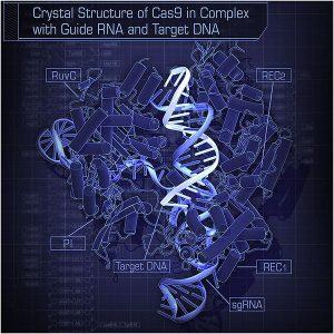 CRISPR_Crystal_CAS9
